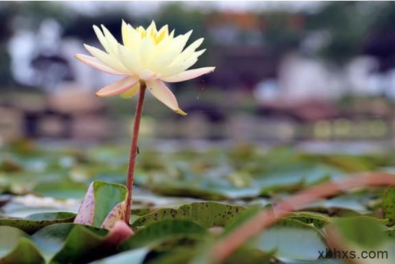 《等一朵花开》