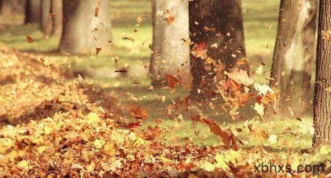 拜访秋天的落叶
