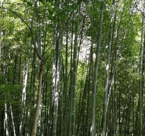 周末去东佘山国家森林公园爬山