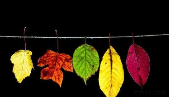 秋天可以温柔共鸣