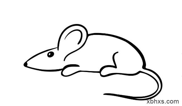 可爱的老鼠形象深入人心