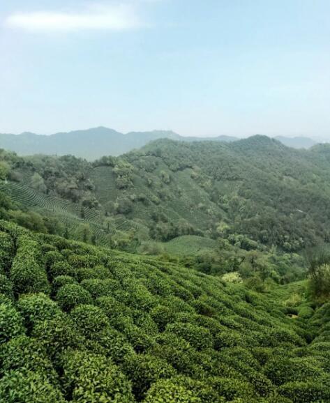 龙井村 | 物华天宝
