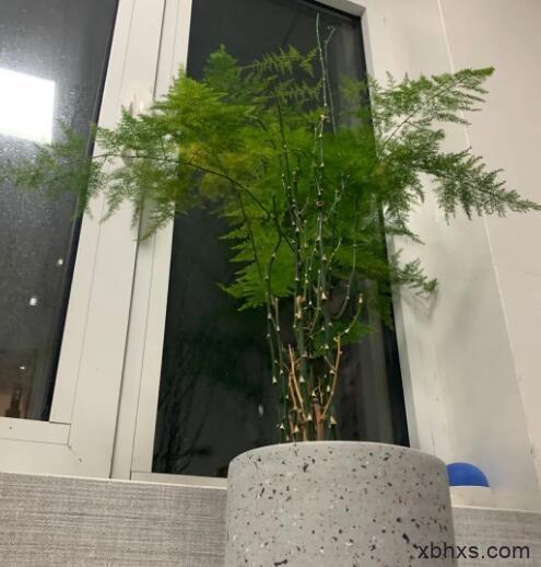 它不拘于造型,只知道它是竹子,它应该向阳而生。