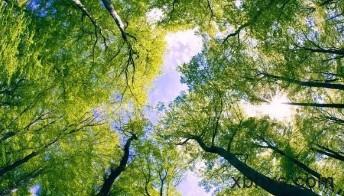 我是树(二)