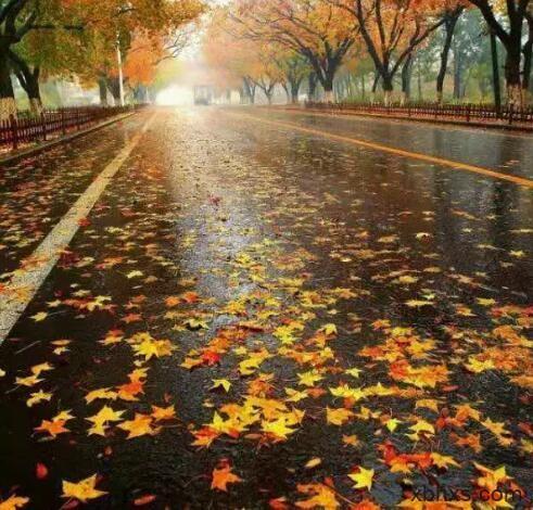 秋雨 秋风 秋正浓