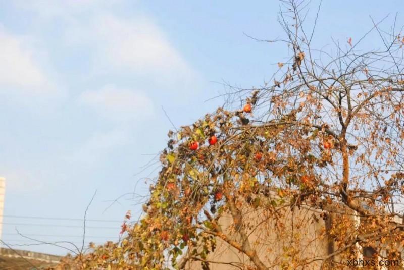 草木人间*栝楼,夏夜的仙女,秋冬的画