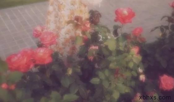 """""""玫瑰只有一朵,时间总在犹豫"""""""